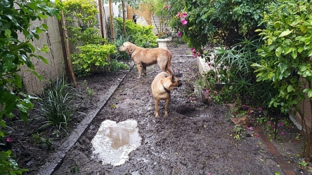Dogs playing in the mud