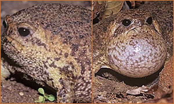 Rain frog collage