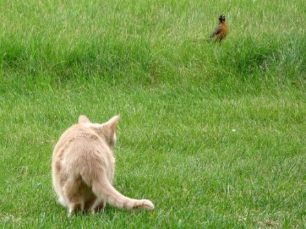 Picture of cat stalkin gbird