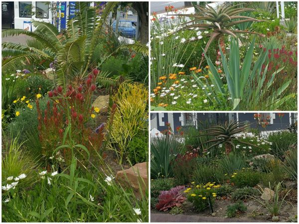 Beat the drought practical tips for a beautiful garden wynberg residents and ratepayers - Tips for a lovely garden ...