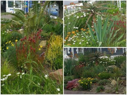 Collage of pics of the garden at Engen Garage