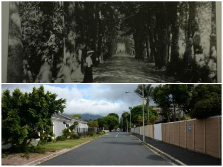 Collage: picture of Wellington Ave from 1900 and one taken more recently